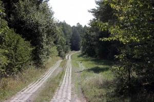 Der Kolonnenweg bei Zimmerau (Thüringen)