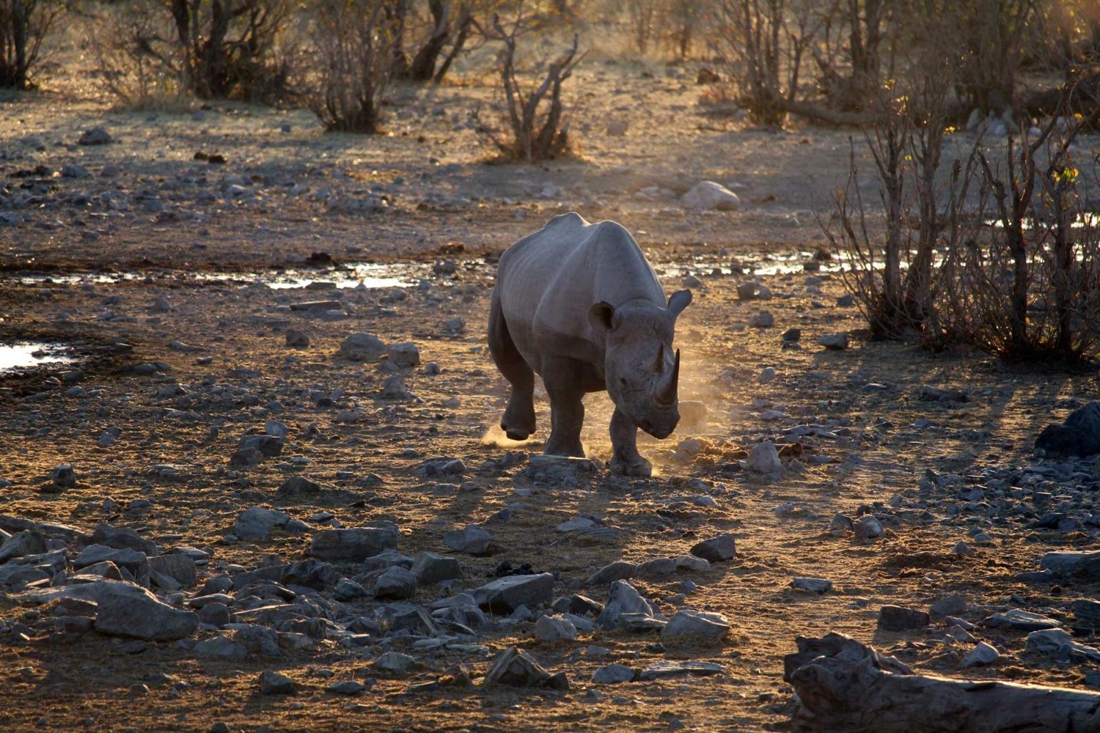 Dieses Nashorn war auf Krawall aus.