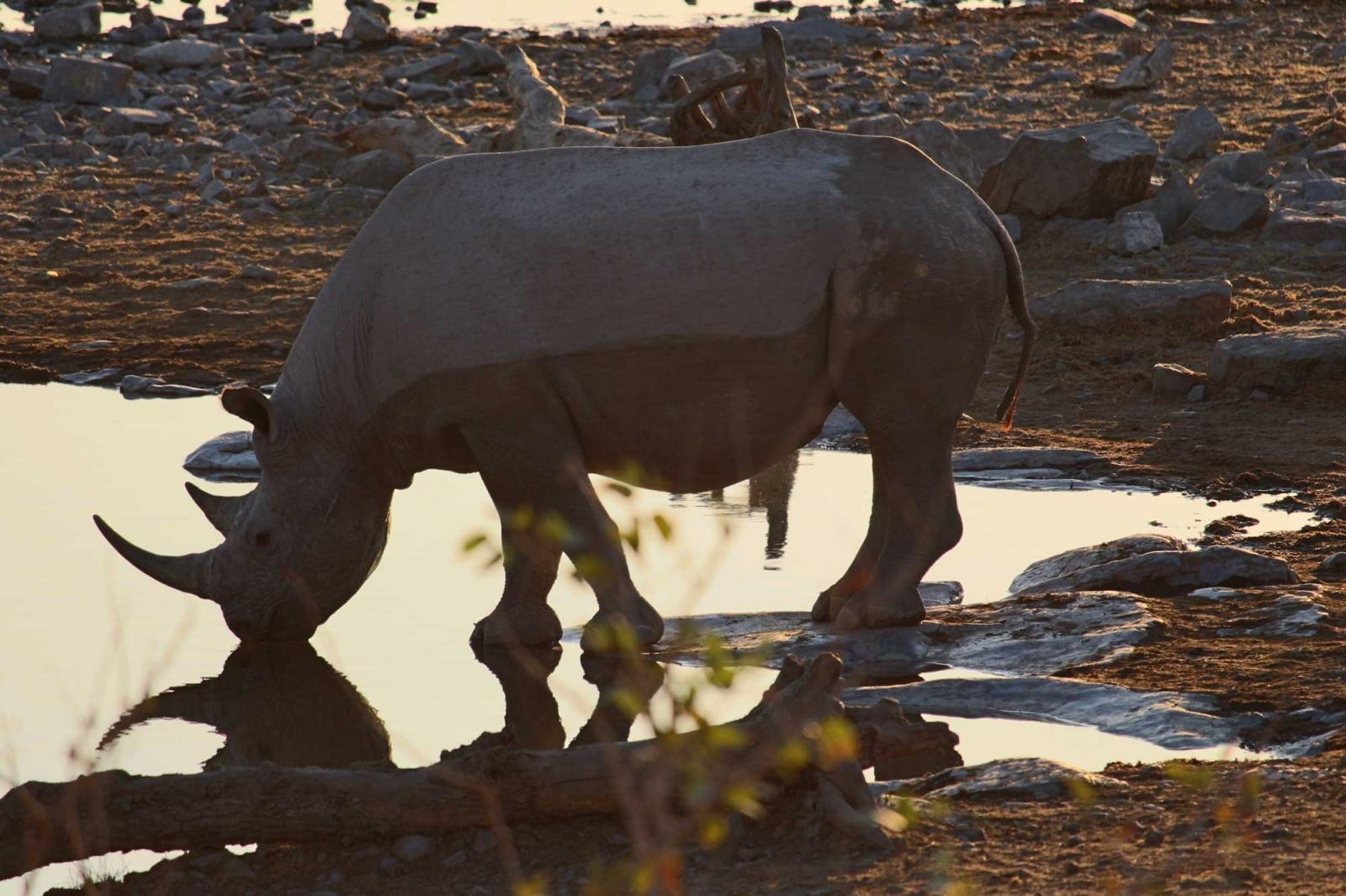 Solange man ein Nashorn nicht beim Saufen stört, ist es friedlich.