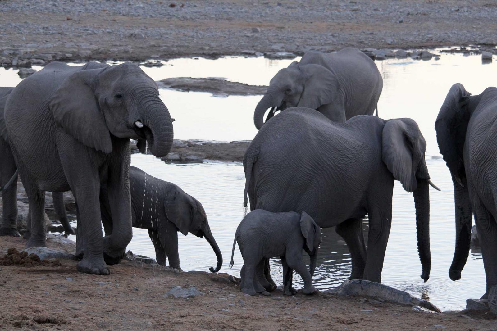 Die Herde beginnt gleich mit der Wasserschlacht.