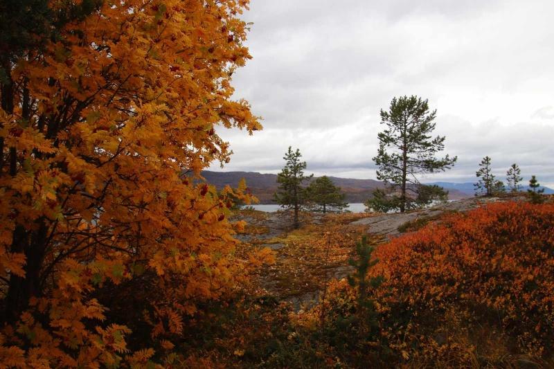 Herbstfärbung in Alta
